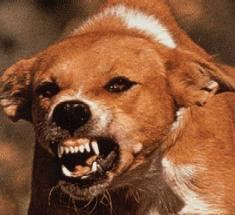 Hund til danmark