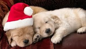 God jul og godt nyttår til hunden din.